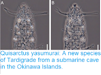 http://sciencythoughts.blogspot.co.uk/2015/06/quisarctus-yasumurai-new-species-of.html