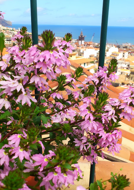 Pink flowers in Funchal city