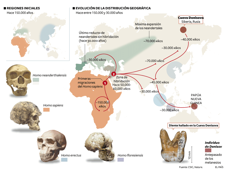 an analysis of the primary aspect of the paleolithic homo sapiens The primary problem that hinders many it is not clear if by archaic homo sapiens the authors mean eurasian colonization, homo erectus, homo sapiens.