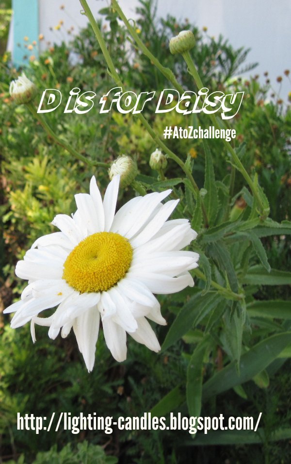 D is for Daisy