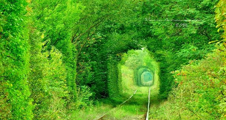 Tunelul Dragostei sau Tunelul Iubirii din Obreja, județul Caras-Severin