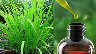 palmarosa yağı nedir - palmarosa yağı faydaları - KahveKafeNet