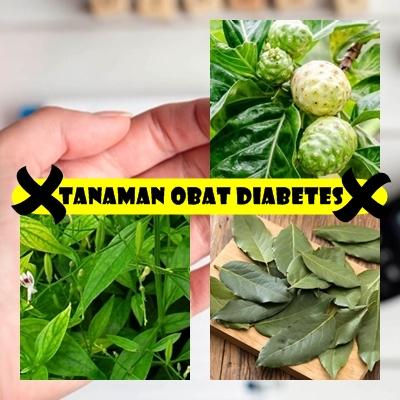 Tanaman Obat Diabetes Basah Tradisional Paling Ampuh Dan Aman