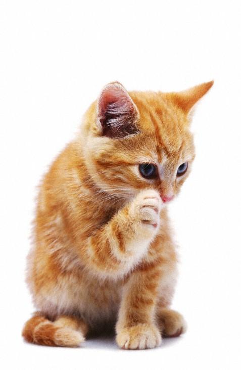 Photo de chat photo d 39 un petit chaton roux tout mignon - Chat tout mignon ...