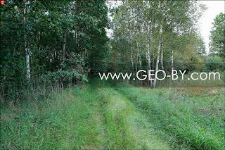 Налибокская пуща. Зарастающая дорога с Красной Горки в Клетище