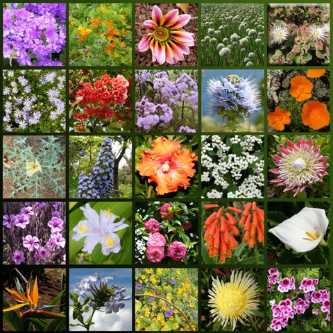 Different Types Of Flowers And Names With Picture