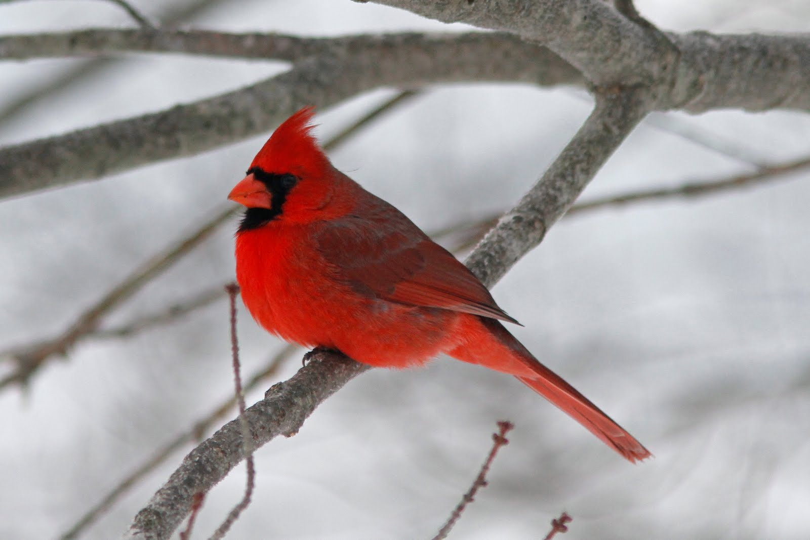 Quabbin birding and beyond: Winter birds at Covey WMA