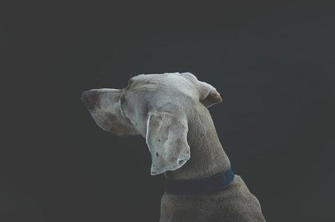 CUENTO Sara y el gris perro | Ángel Fuentes Balam