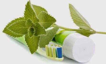 vajon a menta levelek segítenek a fogyásban