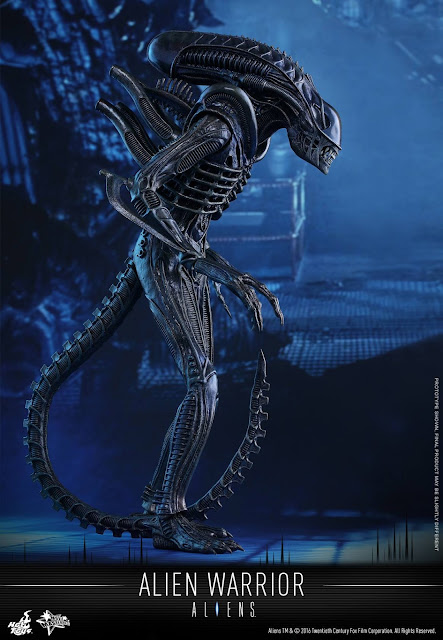 "toyhaven: Hot Toys all new ""Aliens"" Xenomorph 1/6th scale ..."