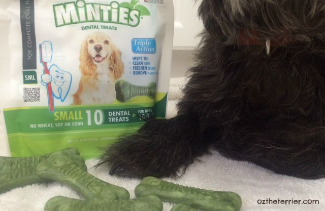 Minties Triple Action Dental Chews for good #DogDentalHealth