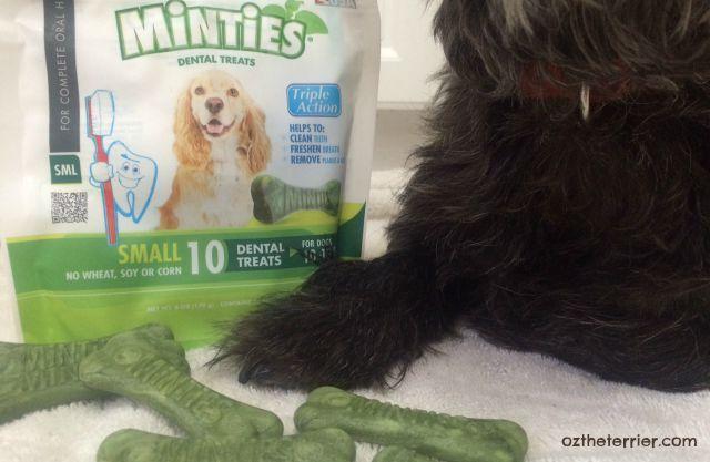 Minties Triple Action Dental Chews for good #DogDentalHealth