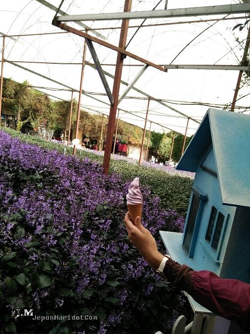 Cameron Highland : jalan-jalan di Cameron Lavender Garden