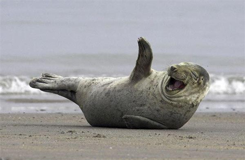 Funny Pictures of Animals: Funny laughing animals