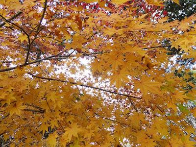 王仁公園・秋の紅葉ウォーキング