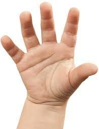 Foto de una mano - Sentido del tacto