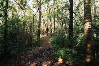 Ein schmaler Pfad führt durch den Wald. An einem Baum rechts im Bild hängt ein Wegzeichen.