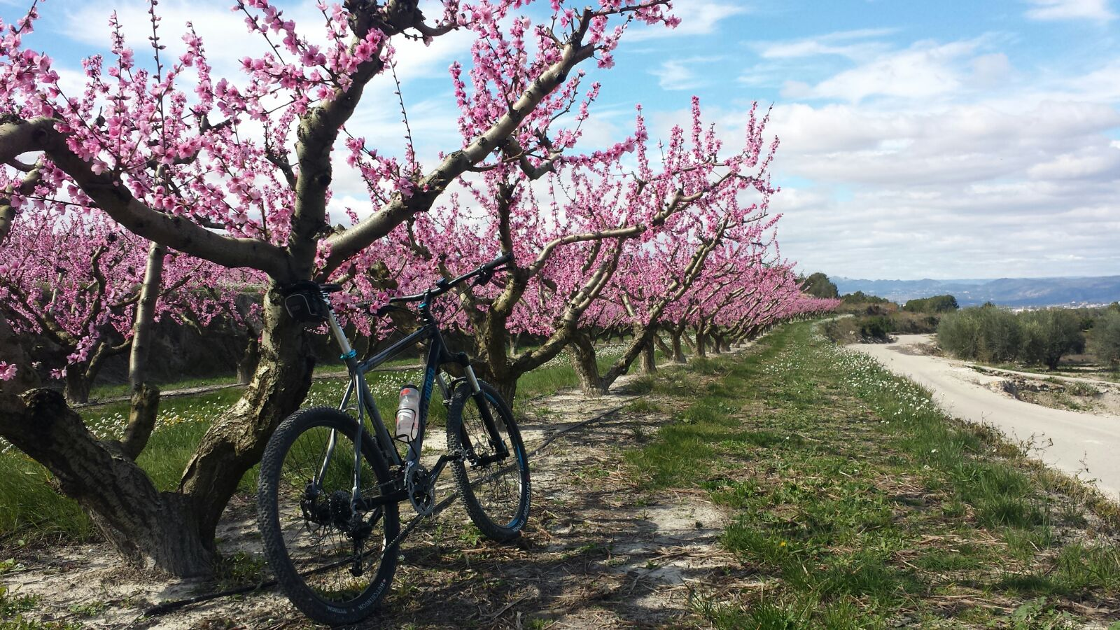 Cycling in Valencia - Almonds in Llutxent
