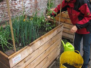 ecologisch tuinieren, moestuin, moestuinweetjes, wisselteelt, combinatieteelt