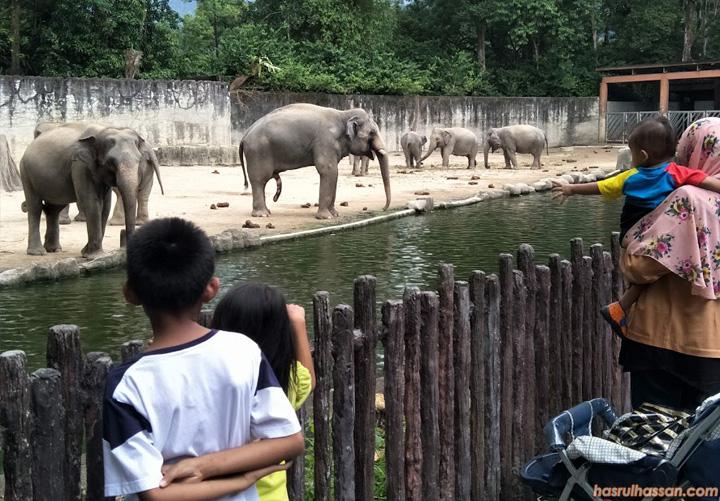 Gajah Asia di Zoo Taiping