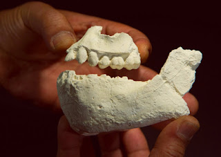 اكتشاف حفرية سلف جديد لإنسان كان معاصرًا للوسي