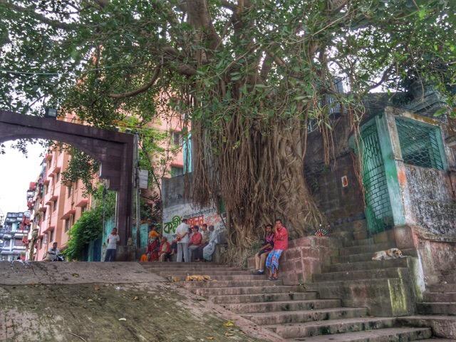 Rai Ghat Banyan Tree