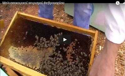 Μελισσοκομικοί χειρισμοί Φεβρουαρίου: Βίντεο απο το meliflorinas