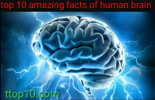 interesting facts about the brain and learning  interesting facts about the brain psychology  interesting facts about human psychology  human brain facts on memory  24 brain facts  facts about the brain for kids  brain facts pdf  brain facts quotes