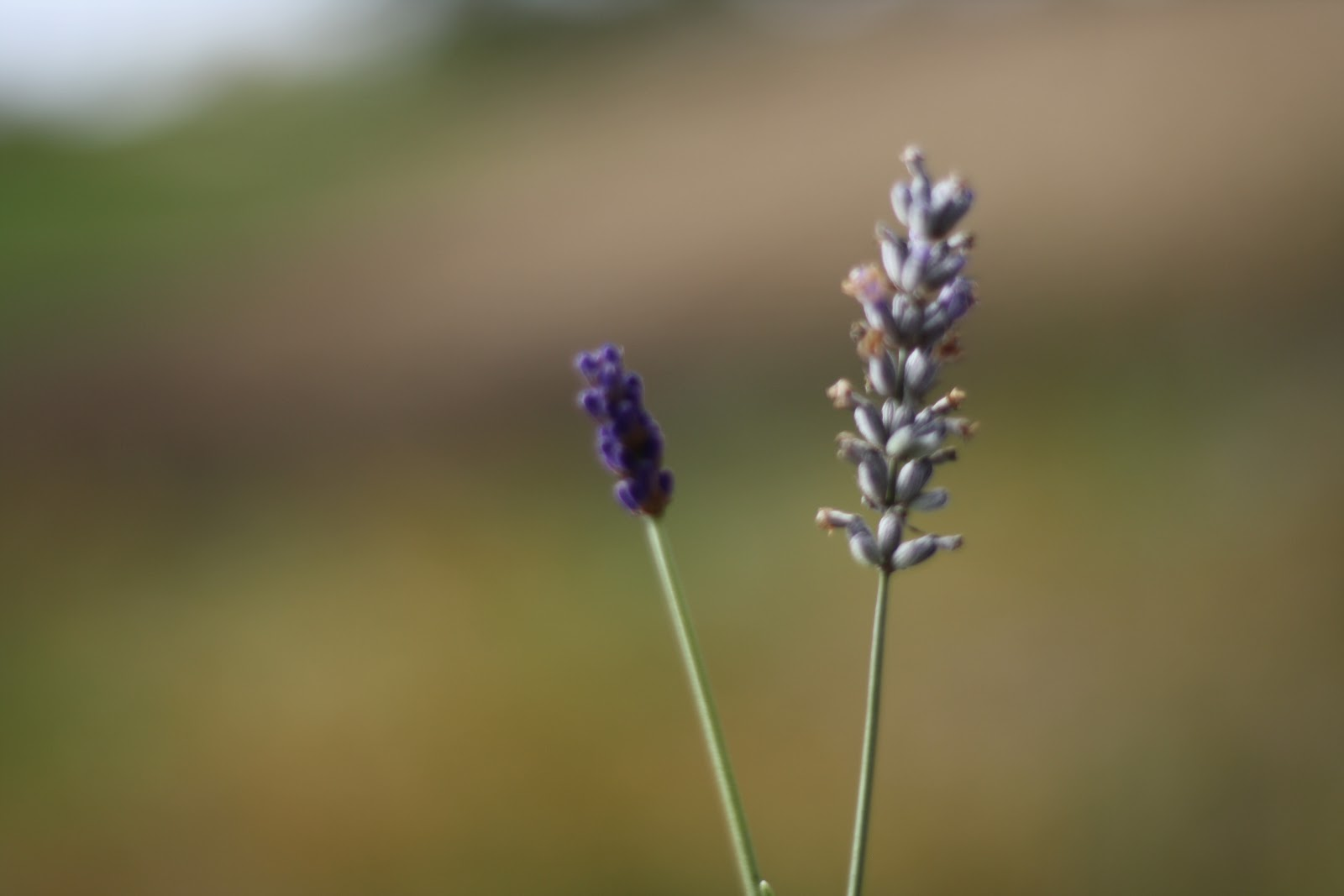 Weir's Lane Lavender Farm + Apiary - The Curated House