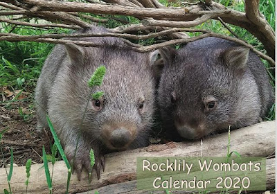 cover of the Rocklily Wombars 2020 calendar, with a photo of two wombats