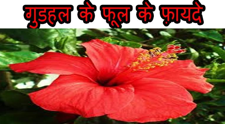 गुडहल के फूल के गुण और उसके उपयोग