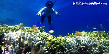 paket open trip private trip murah pulau harapan