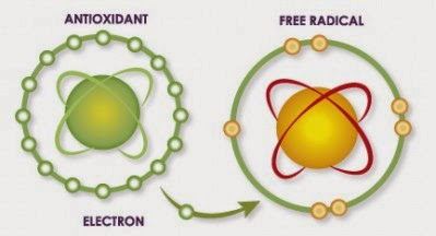 Khasiat Antioksidan