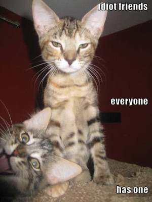 Funny pictures quotes pics jokes memes images photos cats - Funny animal pictures with words ...