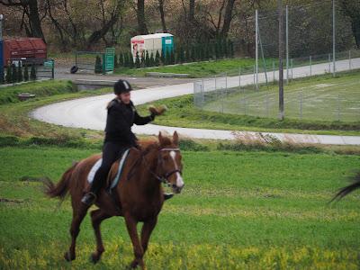 hubertus 2016, pogoń za lisem, pensjonat dla koni w Krakowie, stajnia w Węgrzcach