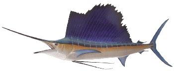 Peixe Sailfish (Istiophorus platypterus)