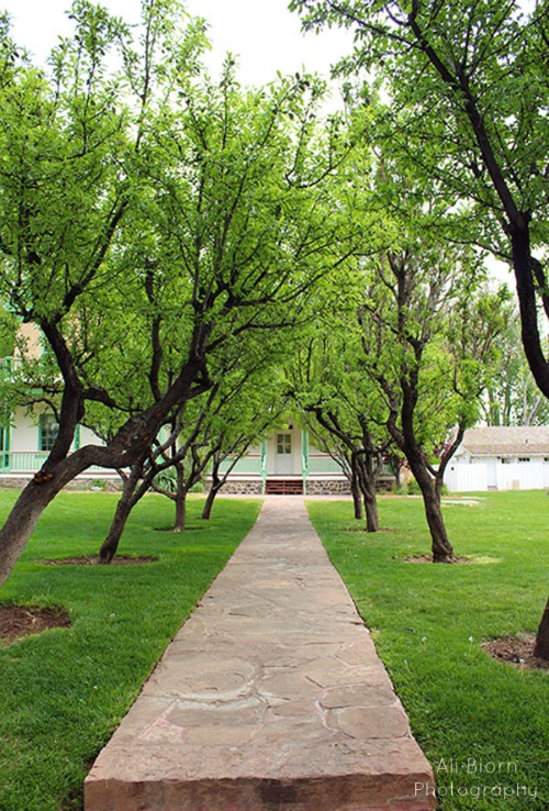 Pathway lined with trees in the spring at Brigham Young Winter Home in St George