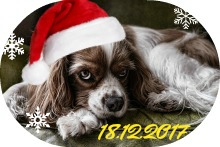 Новогодний подарок от Xelena crochets