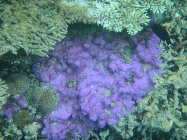 Fondo marino de Blue Bay en Ile des Deux Cocos