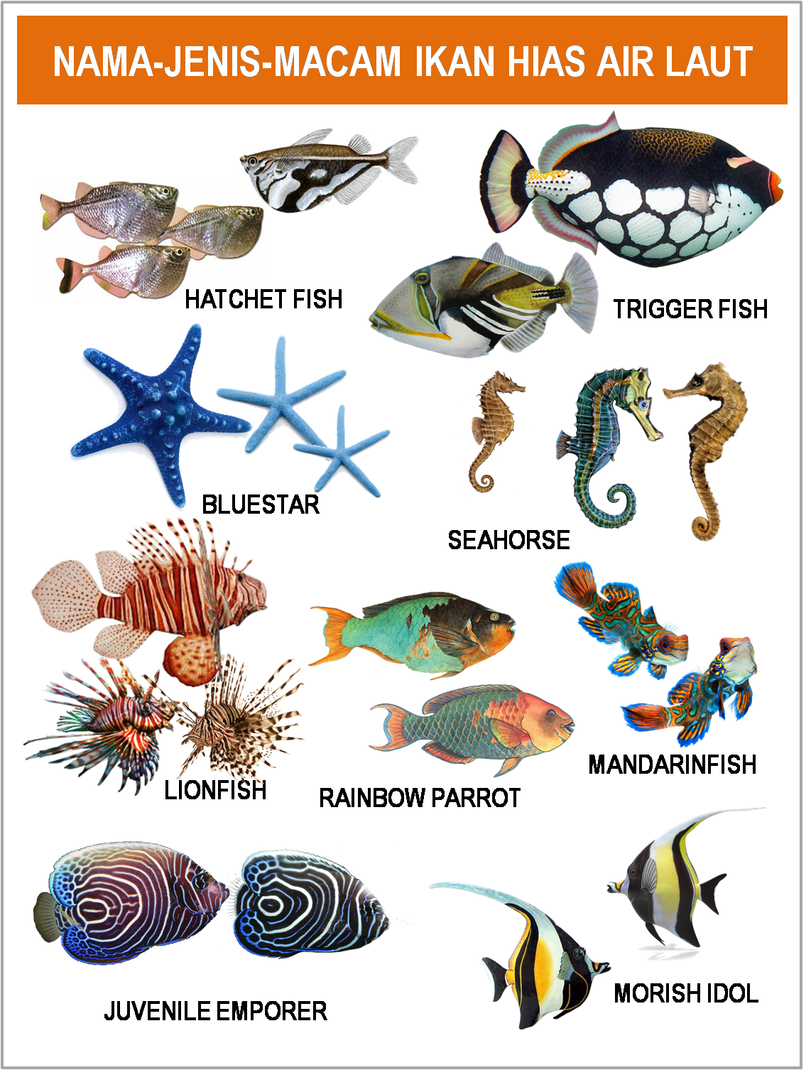 Jenis Ikan Hias Air Laut Dan Gambarnya Gambar Foto Jenis Macam Nama Ikan Hias Air Laut Freewaremini