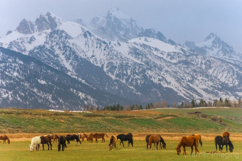 Cramer Imaging's fine art landscape photograph of horses grazing in a field against the Teton Mountains of Wyoming