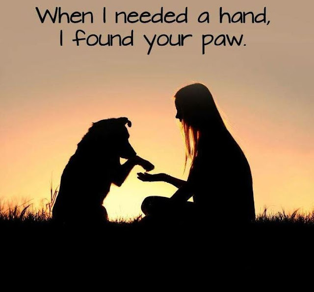 MUST SEE Cute Dog Photo ; When I needed a hand, I found your paw