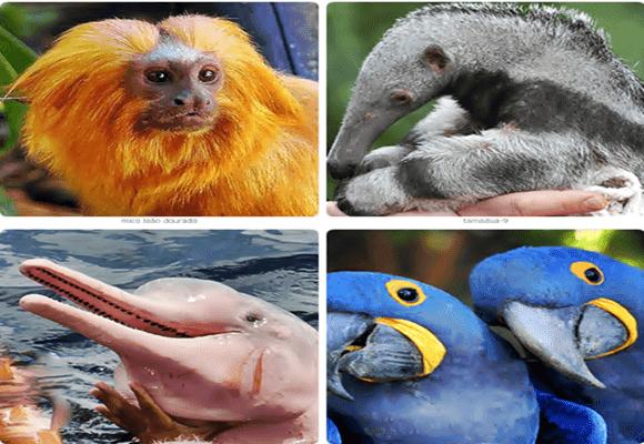 Fauna-espécies-nossa