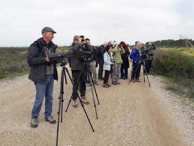 Excursión al Parque Natural de los Toruños y Salina Dolores de Cádiz. Grupo Local SEO-Sevilla.