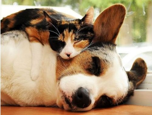 Cute dog and cat friends - photo#41