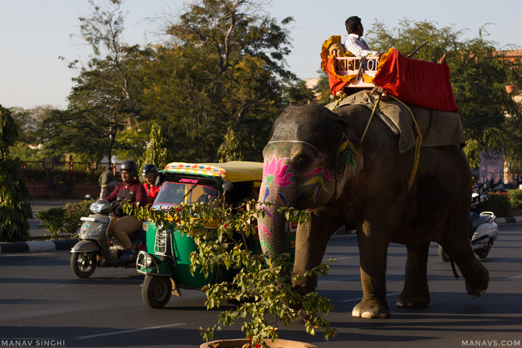 Elephant On the Streets of Jaipur