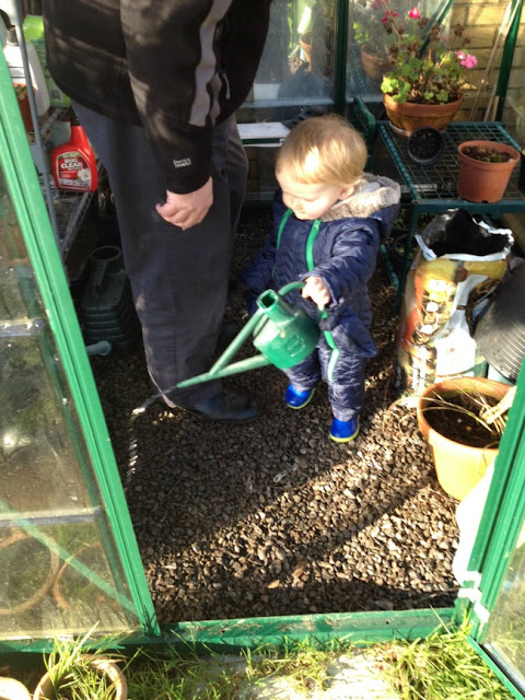 toddler in greenhouse watering plants
