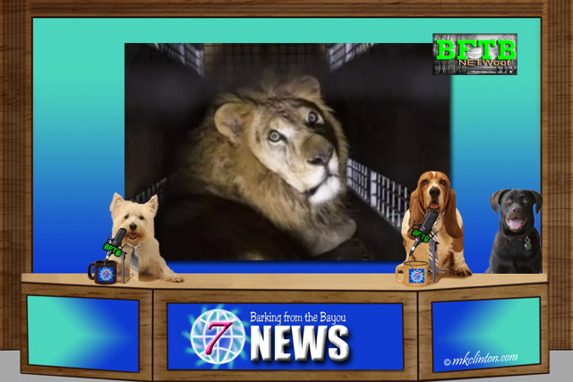 BFTB NETWoof News set with lion on back screen