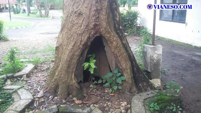 pohon perempuan