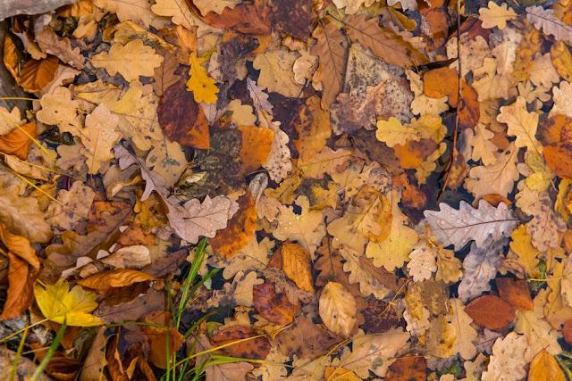 texture foglie natura morta
